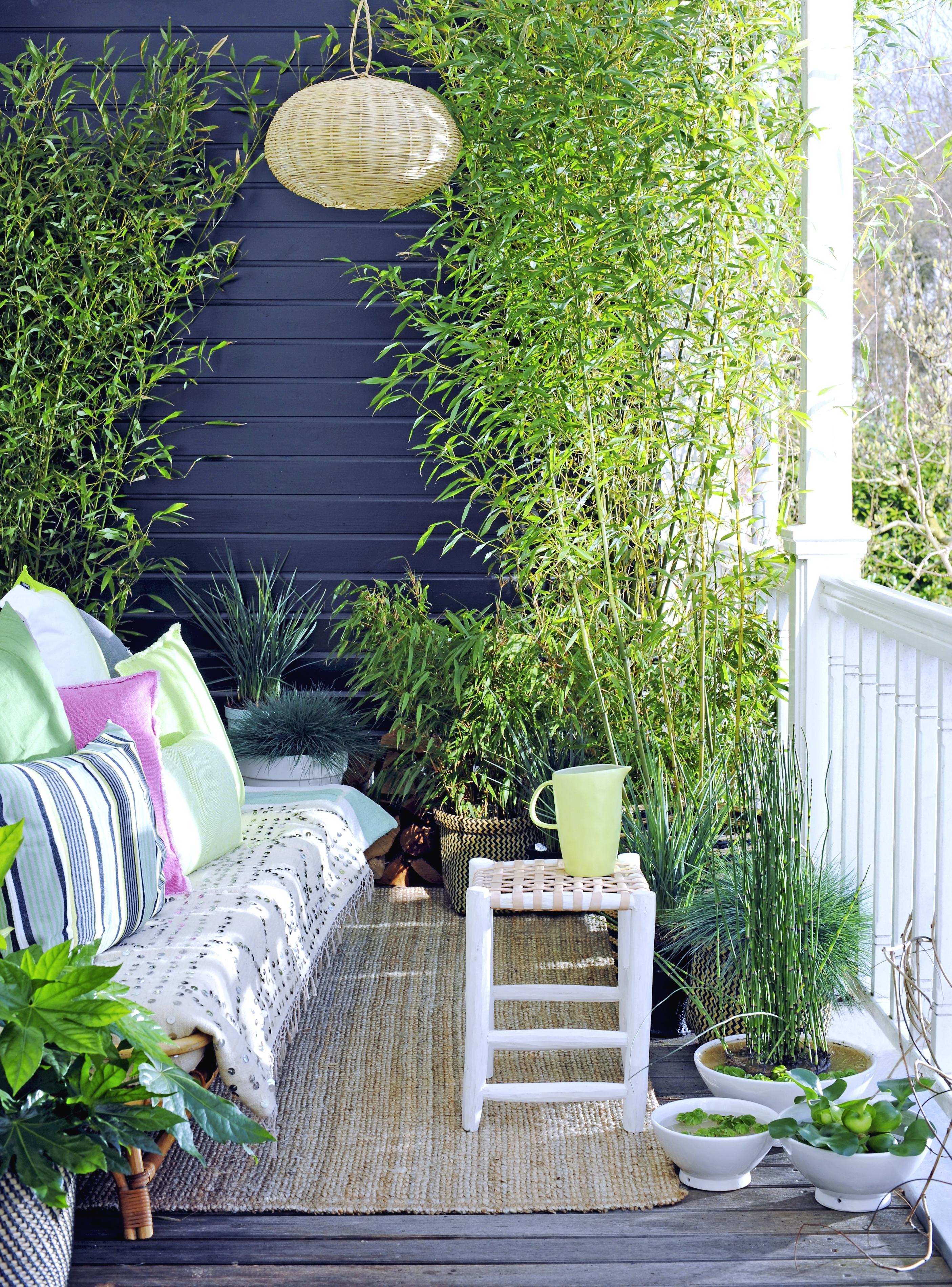 plante balcon ombre