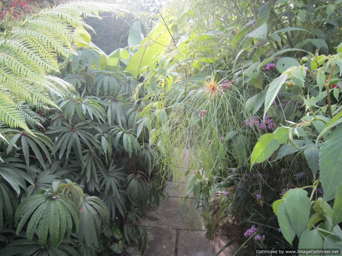 plante exotique jardin idee decoration