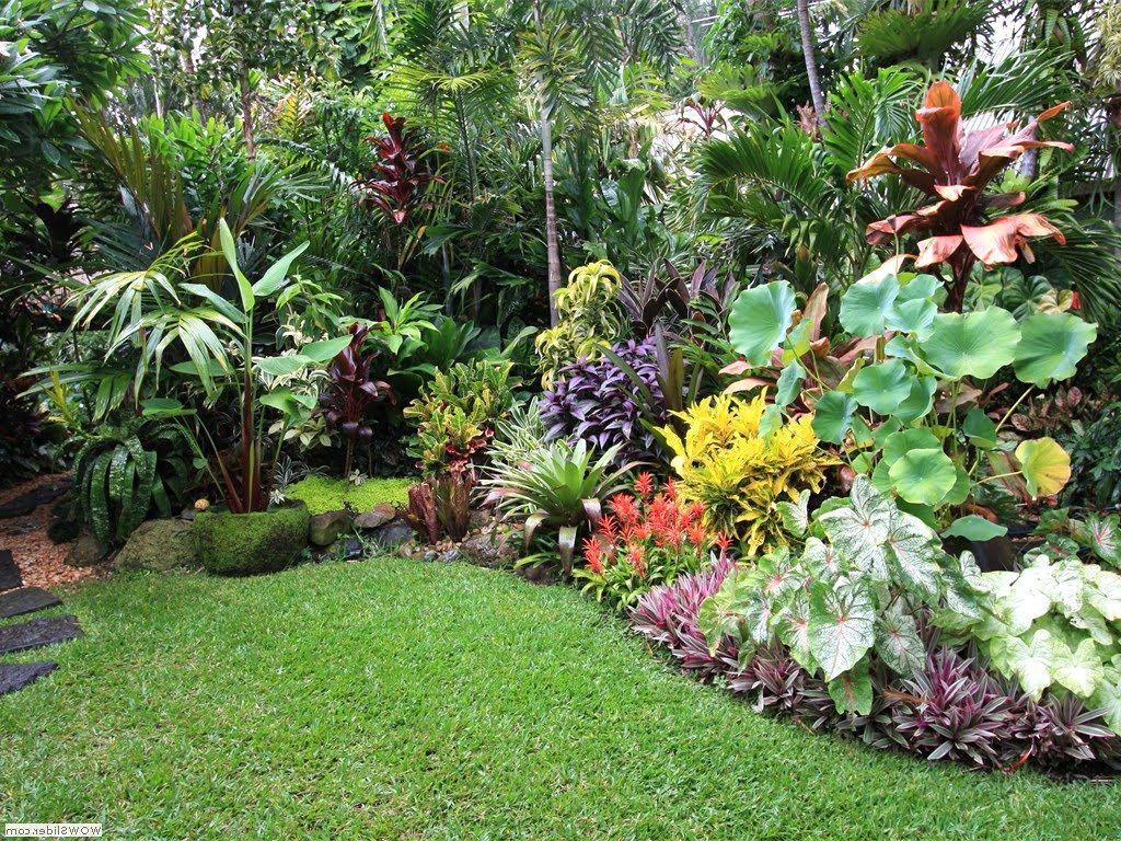 plantes et fleurs exotiques couleur jardin