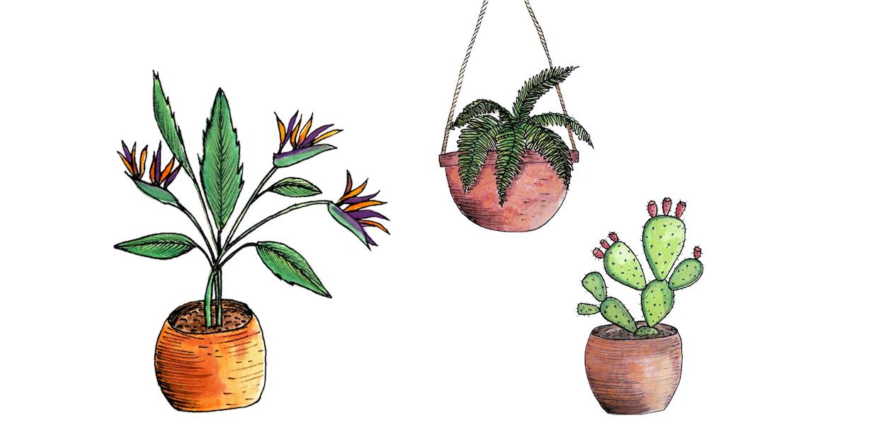 apprendre facilement sur les plantes
