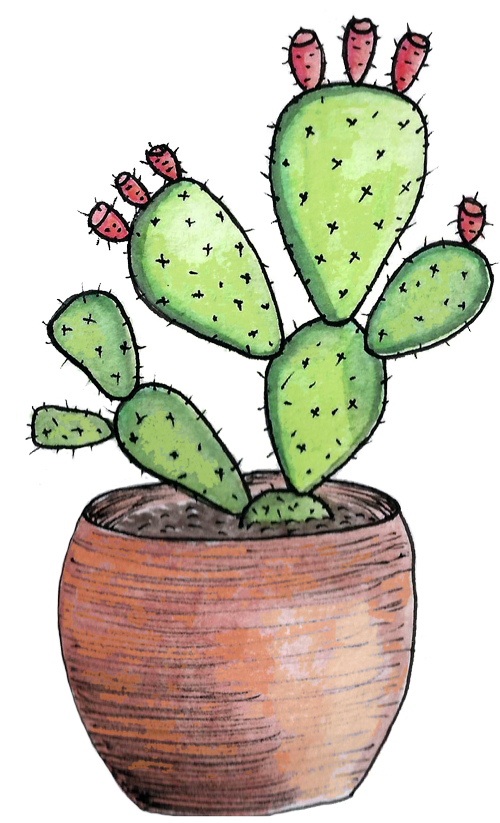 illustration cactus floralia nature