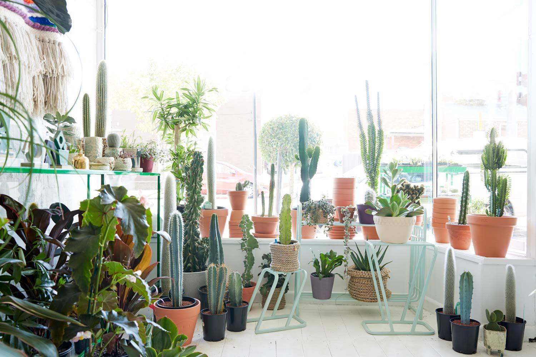 cactus plante facile entretien