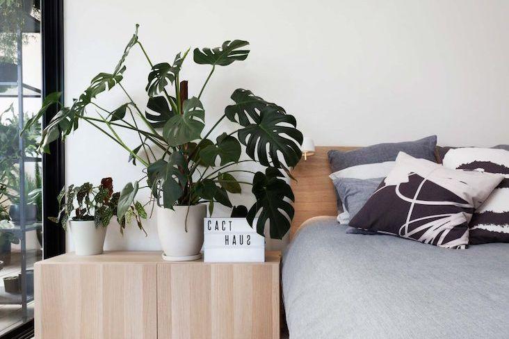 conseils choisir plantes interieur facile entretien