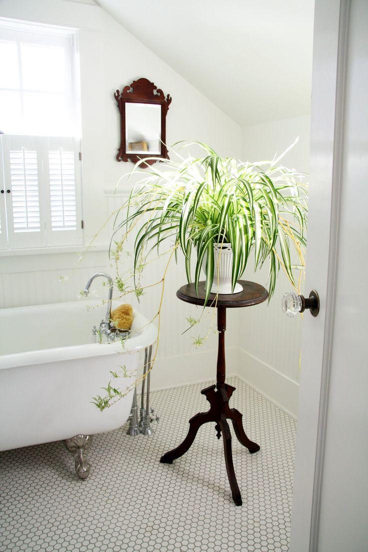 plante araignee facile entretien
