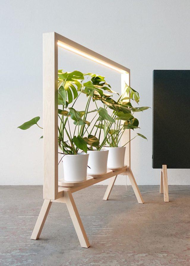 plante et armature simple en bois mise en valeur
