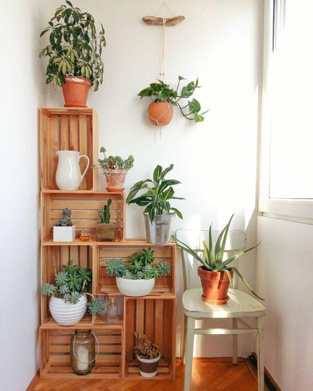 plante et bois cageot idee decoration