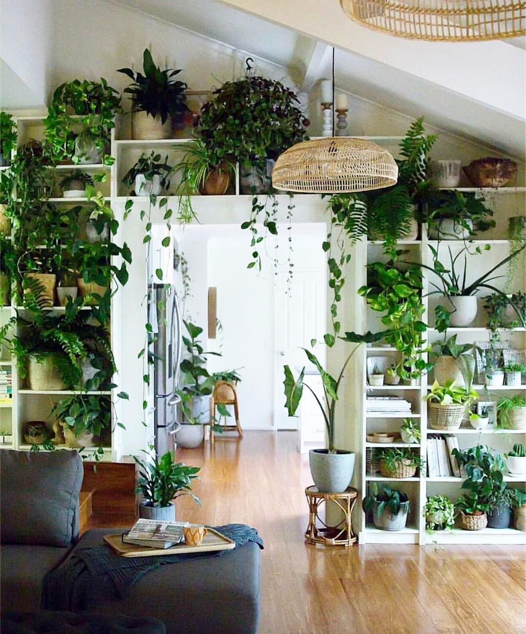 plante interieur decoration bibliotheque