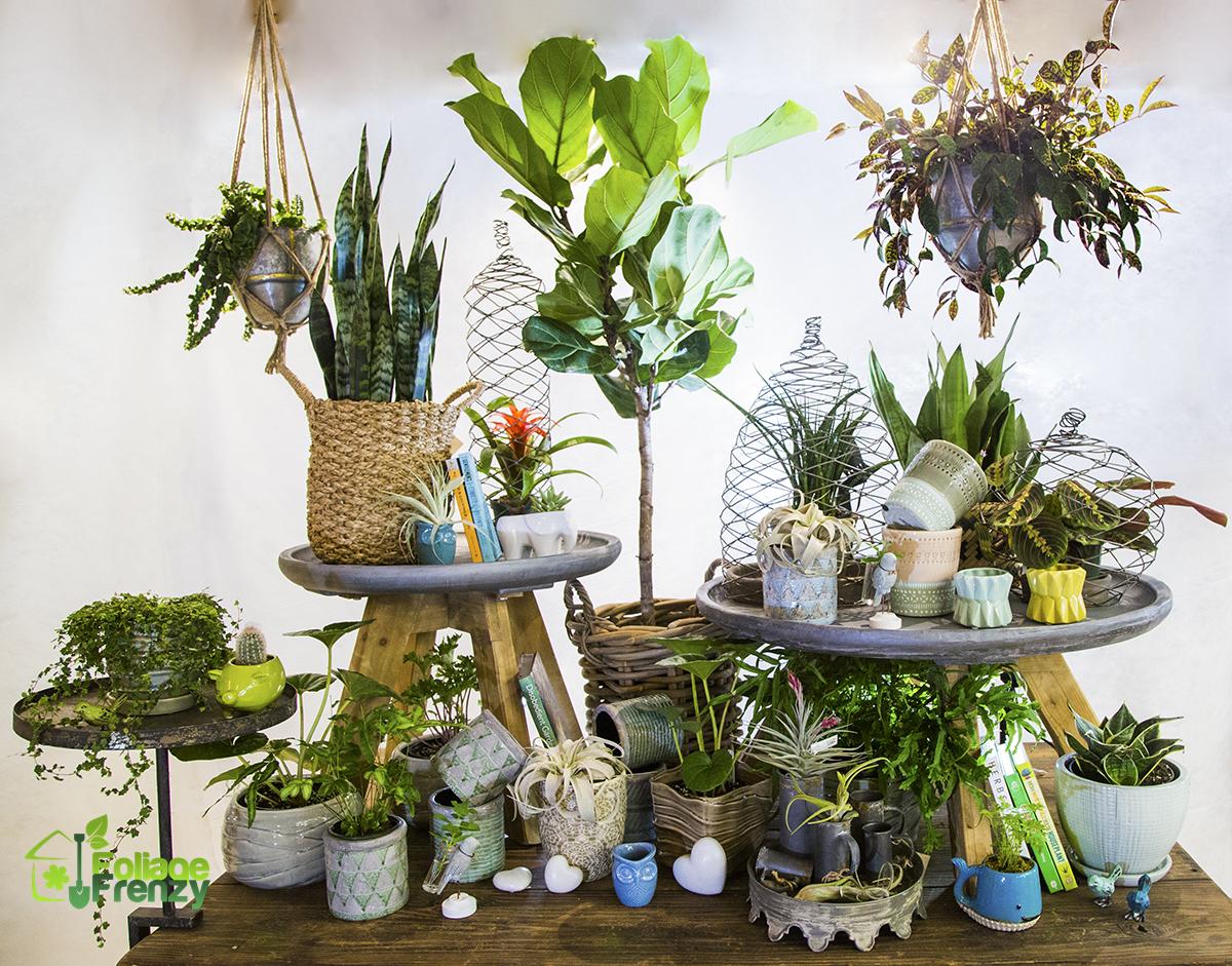 plante interieur depolluante idee deco