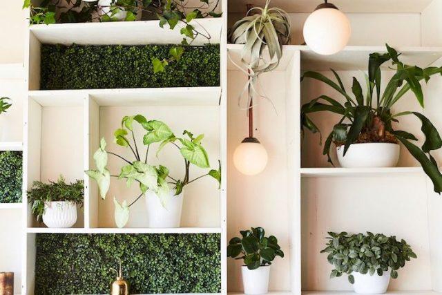 plante verte depolluante decoration maison exemple conseils choisir plantes