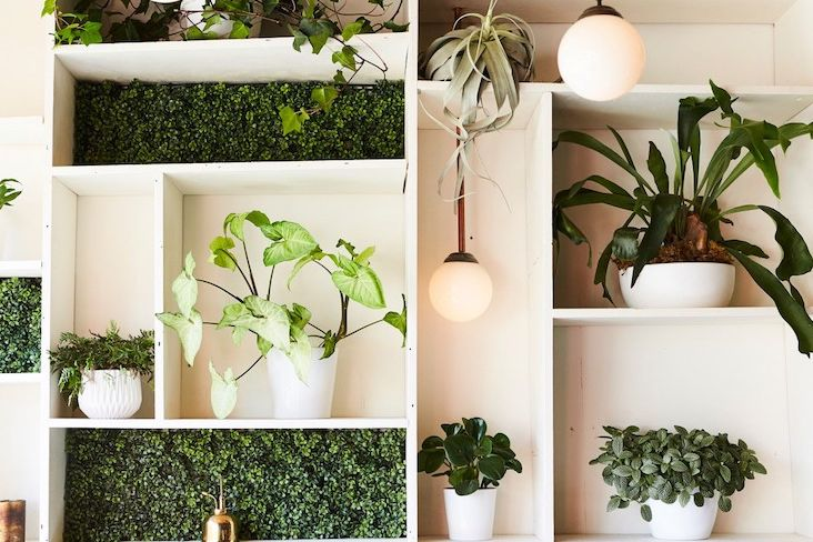 plante verte depolluante decoration maison