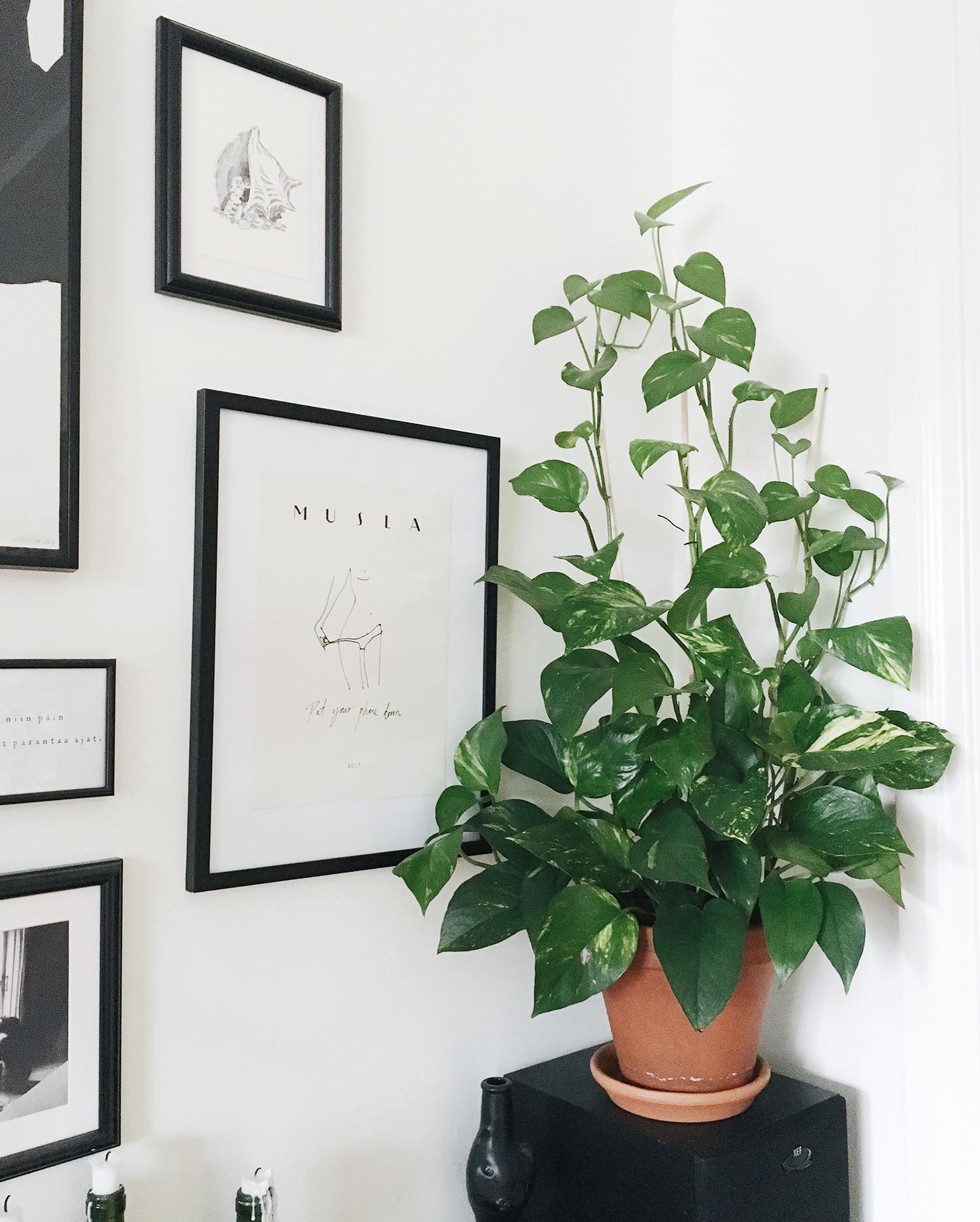 plante verte depolluante pothos