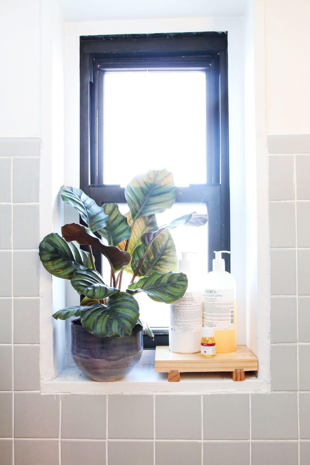 petite salle de bain plante fenetre idee deco