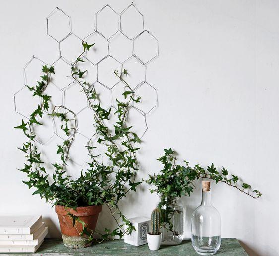 plante grimpante idee deco murale