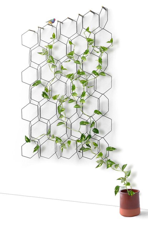 plante grimpante structure geometrique murale