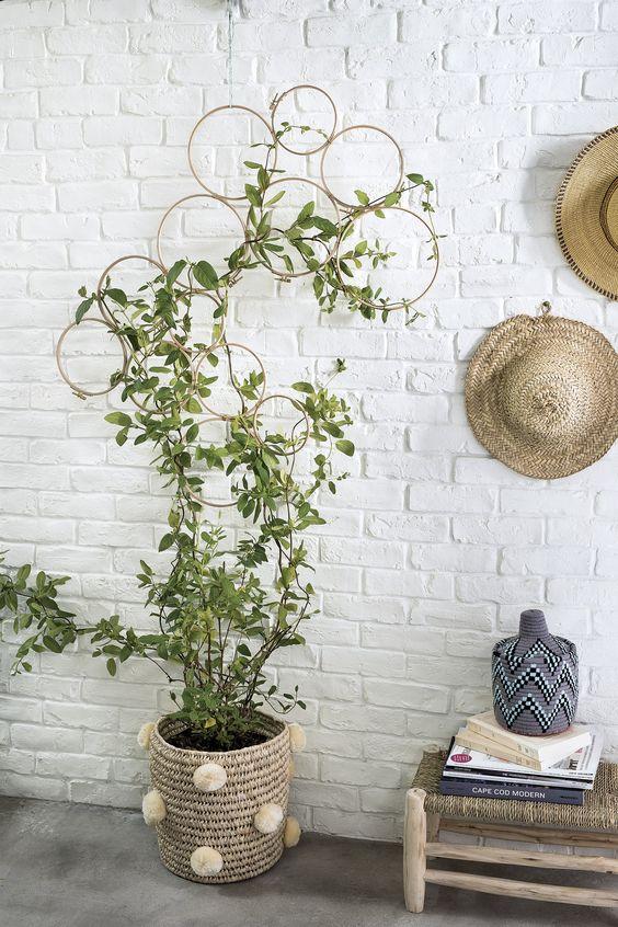 plante grimpante structure ronde murale