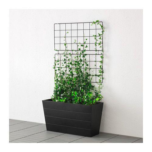 plante grimpante support mural