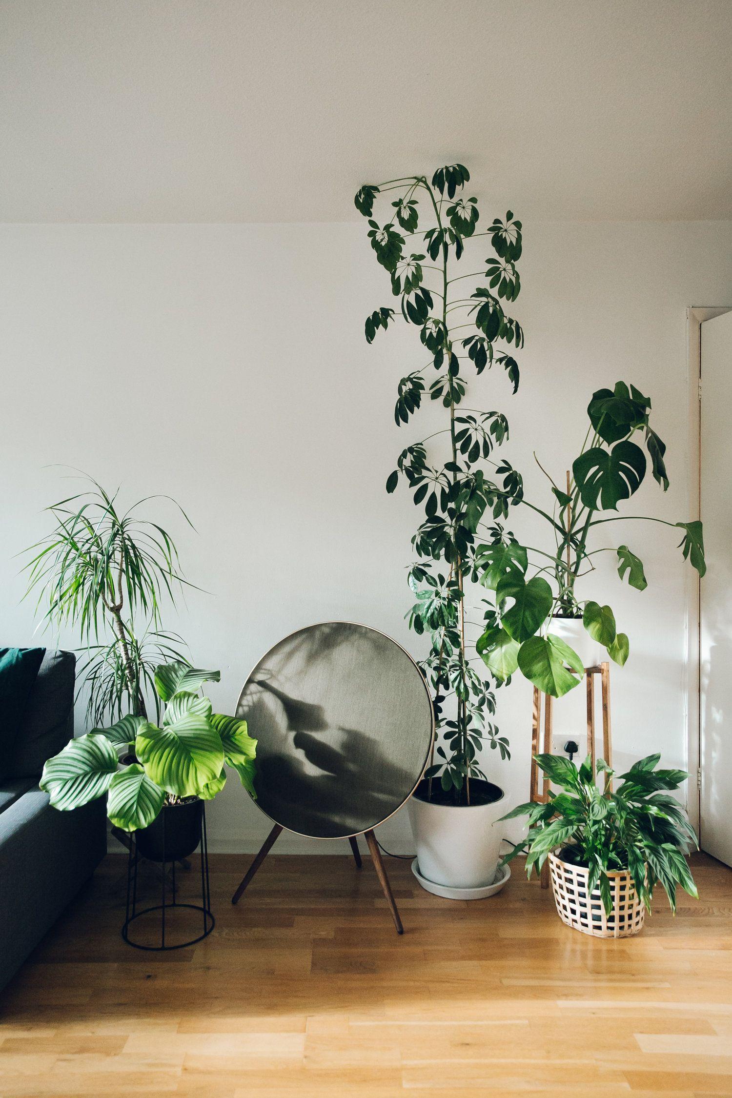 plantes vertes interieur slow deco