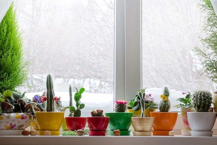 slow interieur decoration entretien plantes vertes hiver