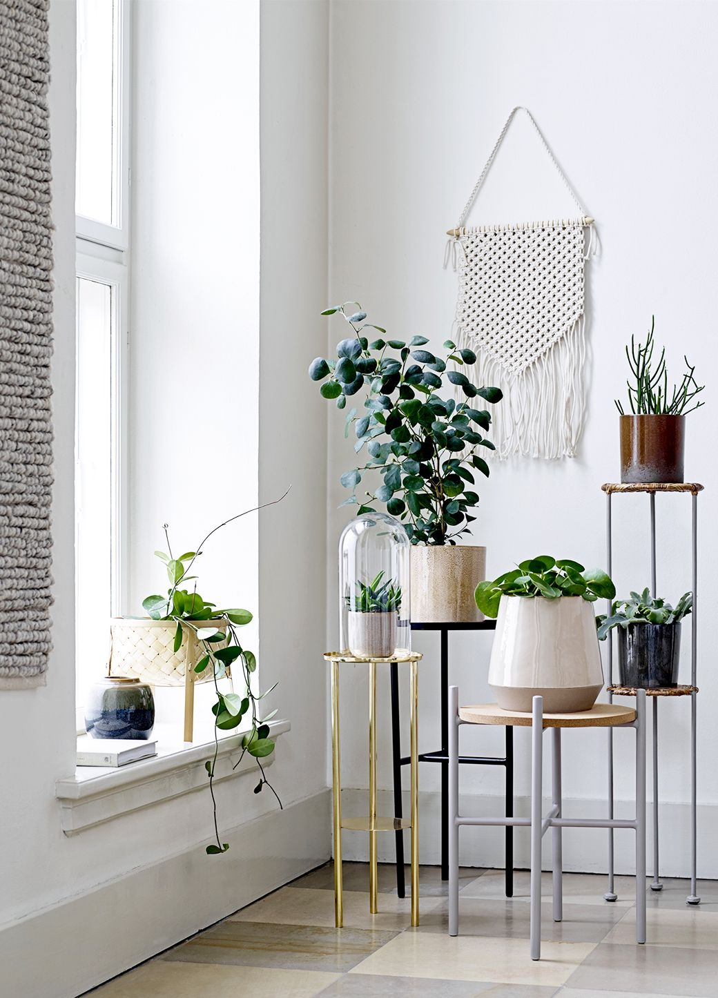 slow interieur plantes verte fenetre hiver conseil