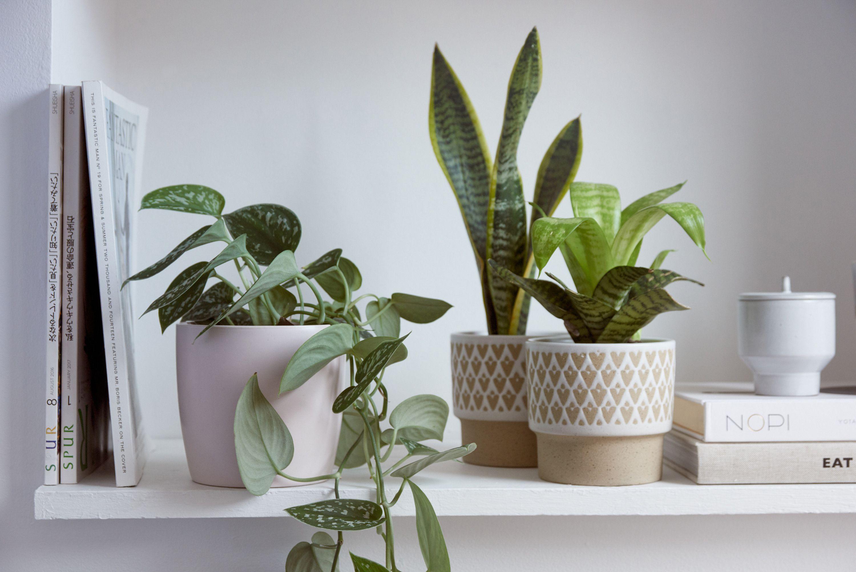 slow interieur plantes vertes hiver