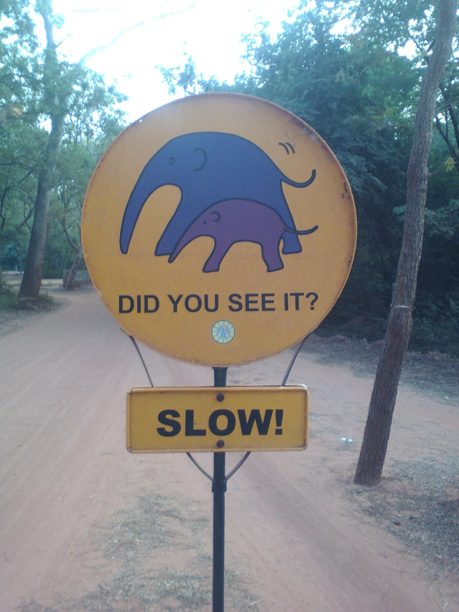 slow travel nature animaux voyage