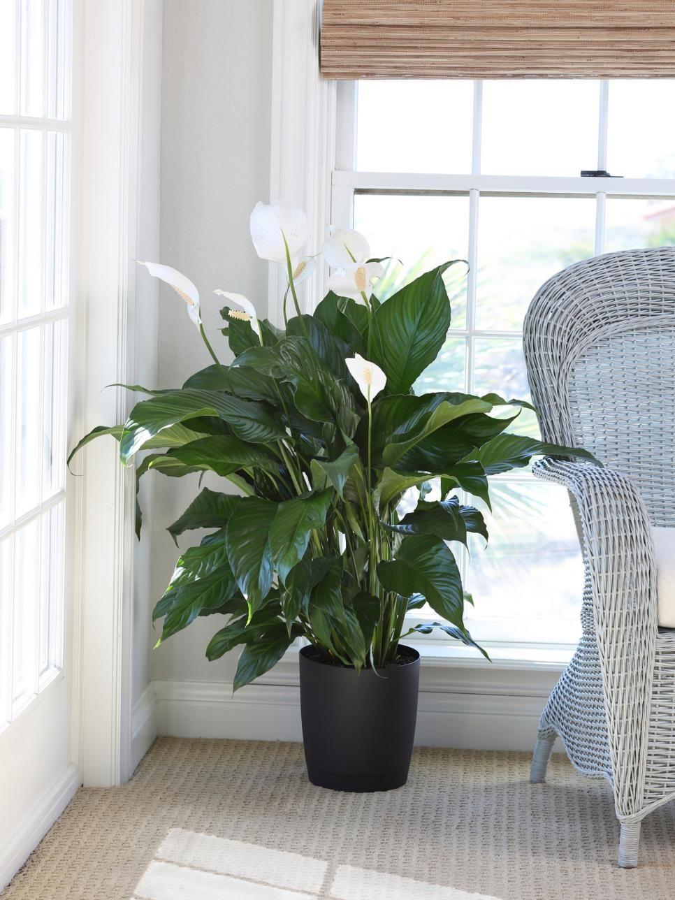 deco fleur plante interieure idee