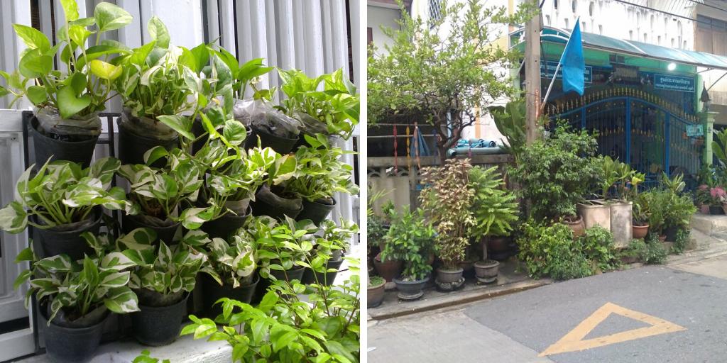 confinement plantes exterieur thailande idee