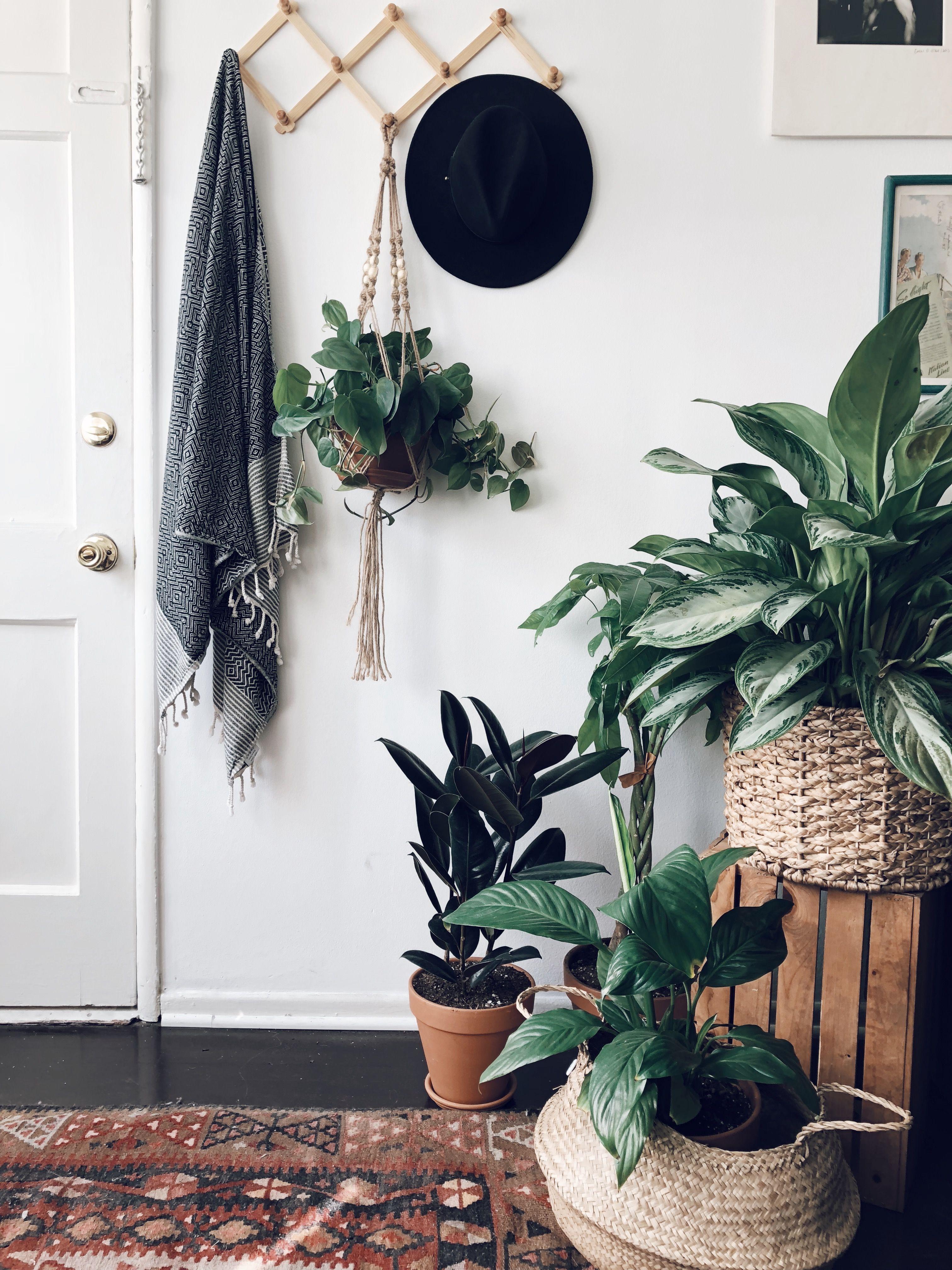 deco interieur confinement idee amenagement plantes