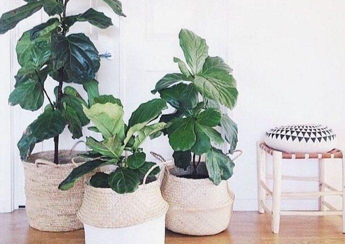 idee deco plante comment mettre en valeur