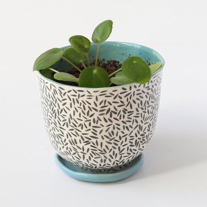 plante cache pot noir et blanc bleu