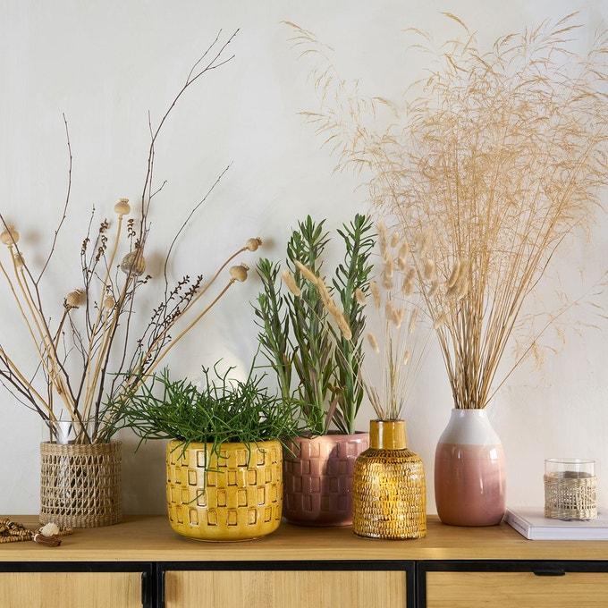 plante cache pot couleur rose jaune