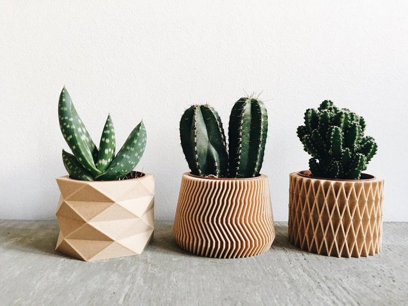 plante deco mini cache pot cactus
