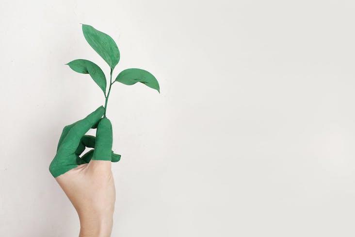 tout savoir peinture ecologique biologique