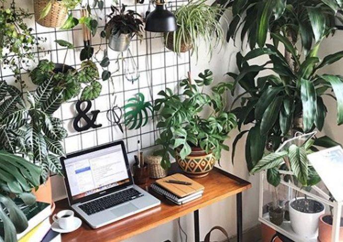 creer jardin interieur conseils deco