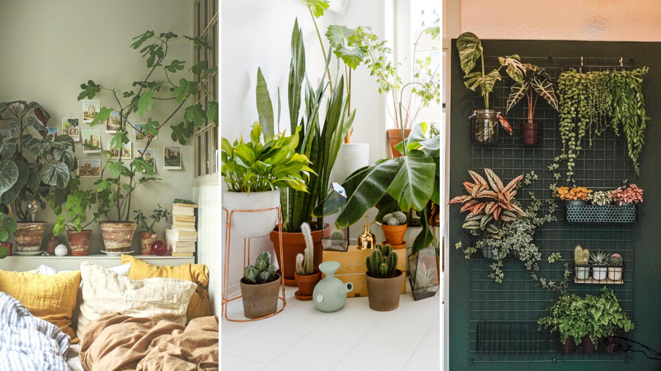 creer jardin interieur idees decoration