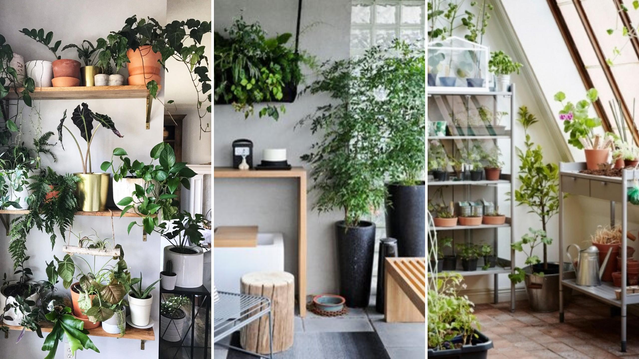 creer jardin interieur petit logement