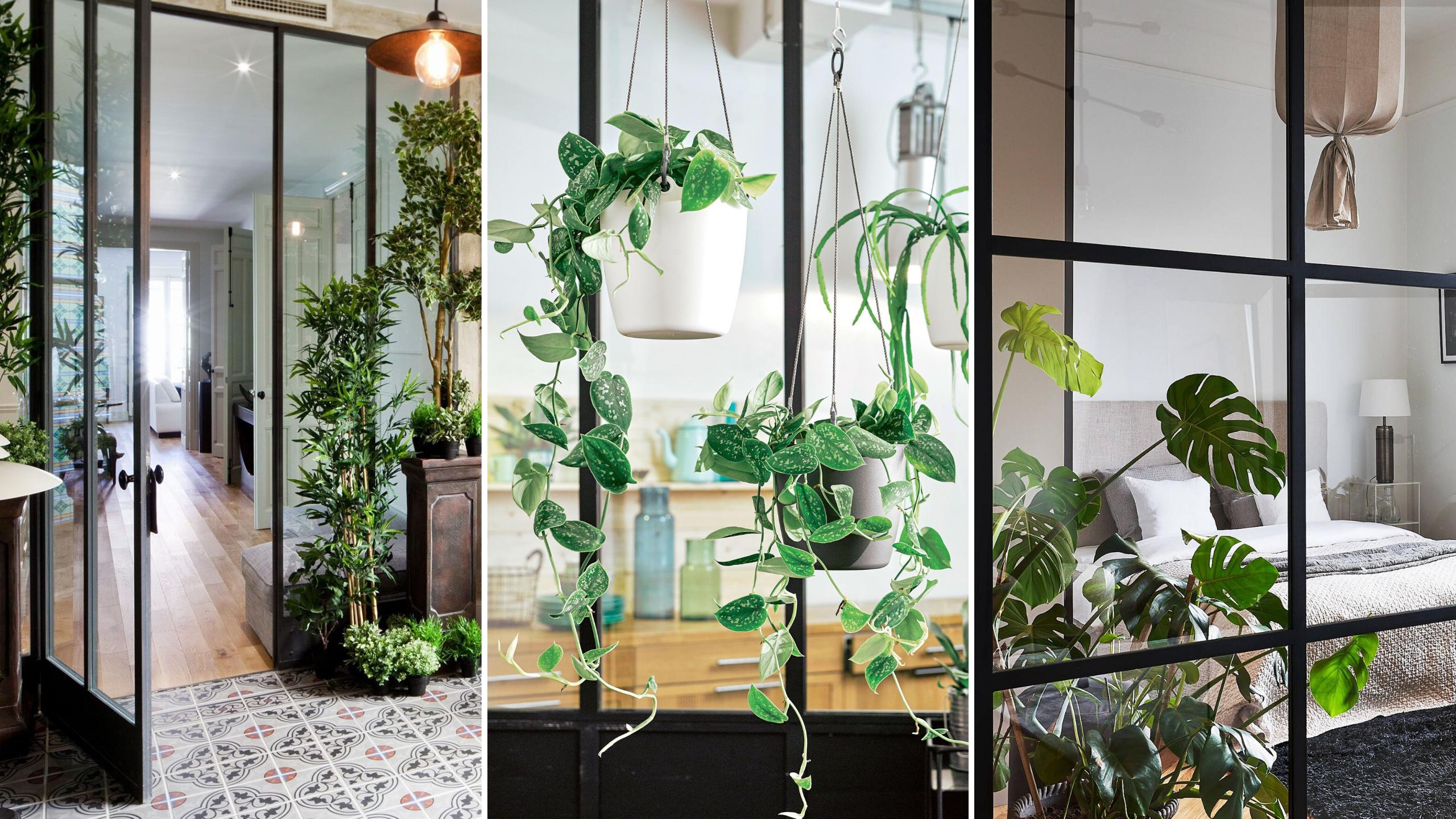 creer jardin interieur verriere et plantes
