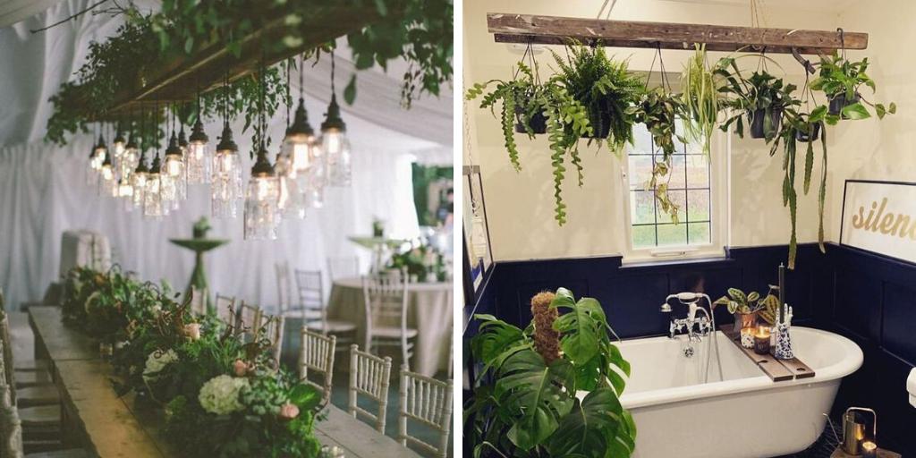 echelle plante suspension plafond idee