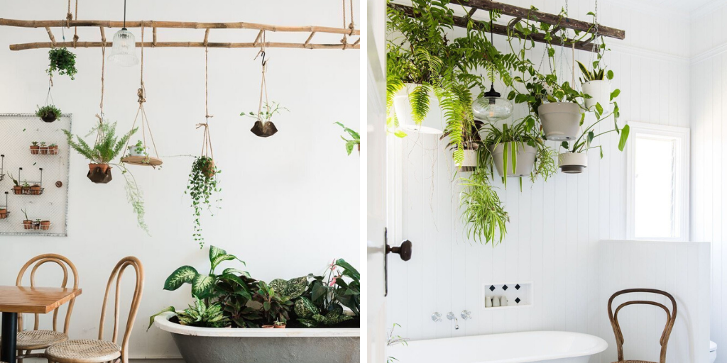 echelle suspendre plante plafond salle de bain