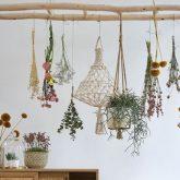 ou trouver echelle suspendre plante