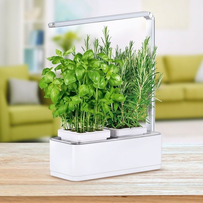 selection deco jardiniere interieure mini potager