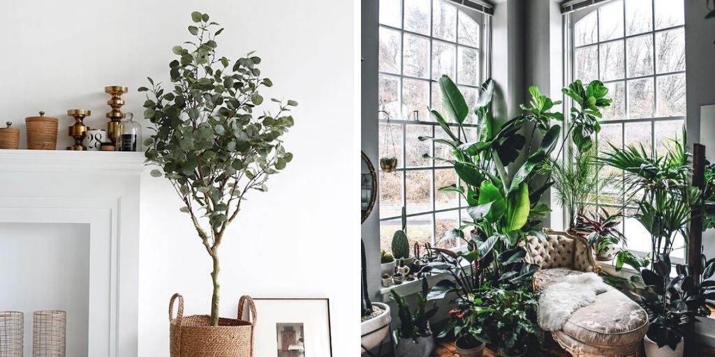 dossier jardin plantes vertes interieur