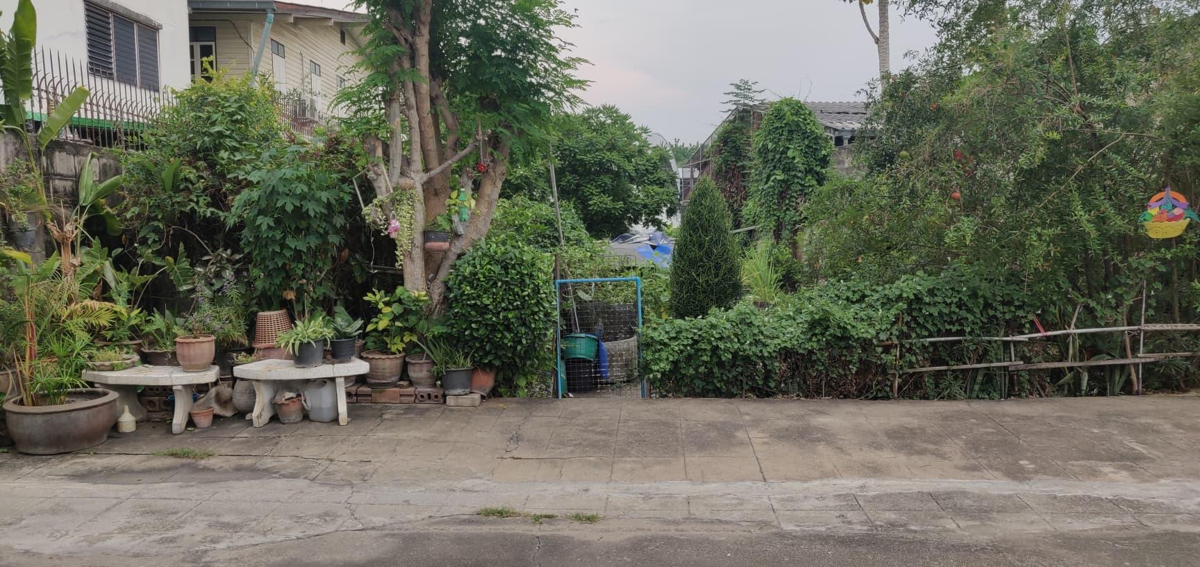 vivre dehors plantes exterieure thailande