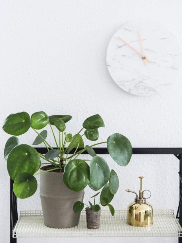 deco salon plante variete facile