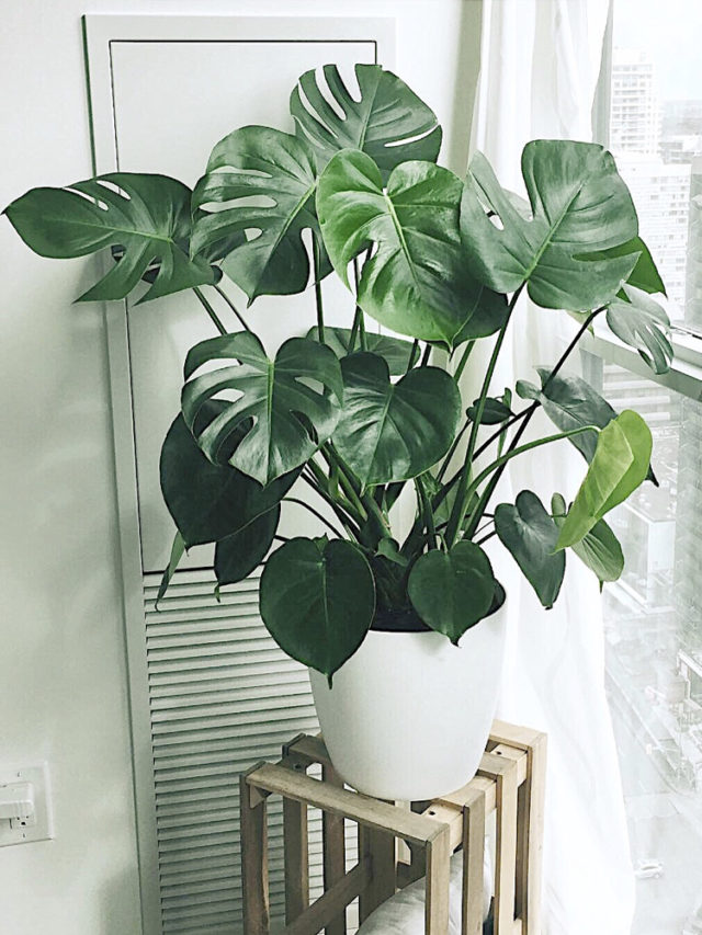 deco salon plante variete tendance