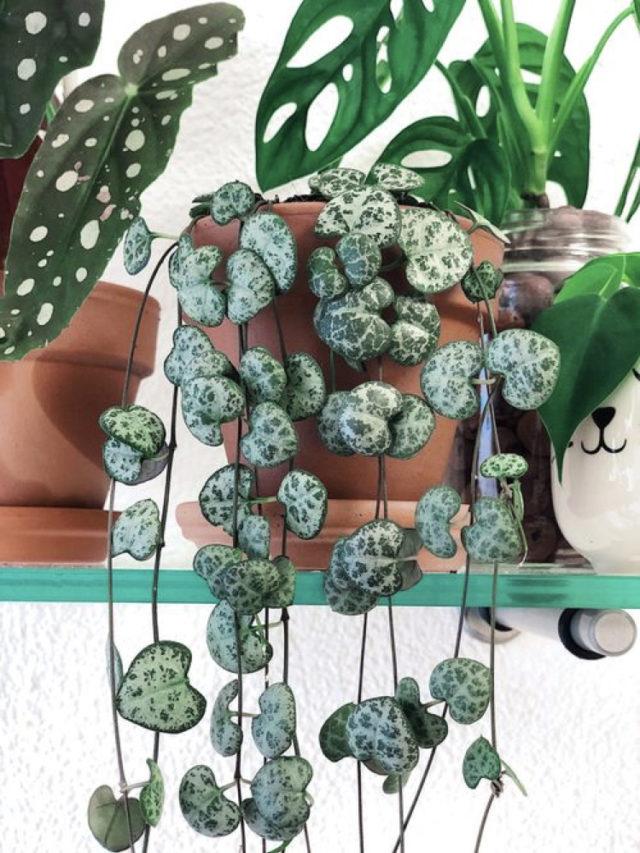 deco salon plante variete tombante