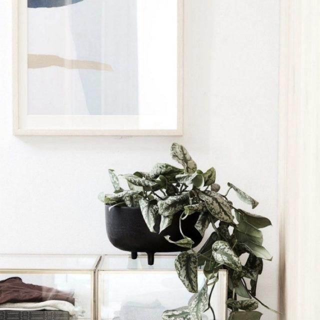 intérieur style nature cache-pot noir design