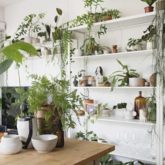idee a copier plante decoration naturelle