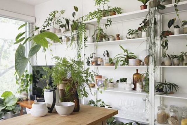 idee a copier plante decoration naturelle