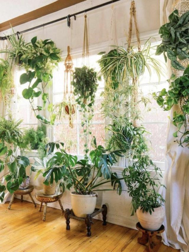 décoration plante verte suspendue et sur tabouret